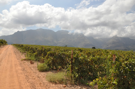 4. Vineyards Cape Town.JPG