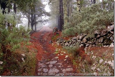 4269 Volcán Hondo de Fagajesto(Camino Pino Gáldar)