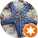 Image Google de Etoile de Mer