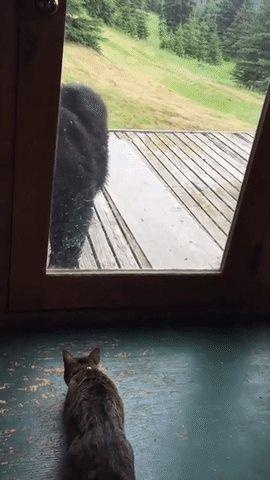 Mèo cậy gần nhà