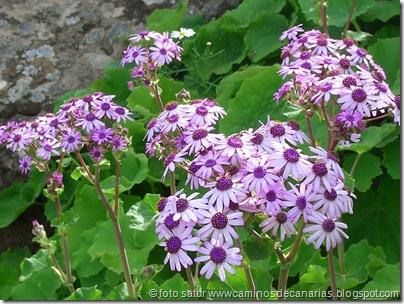 2002 Flor de Mayo
