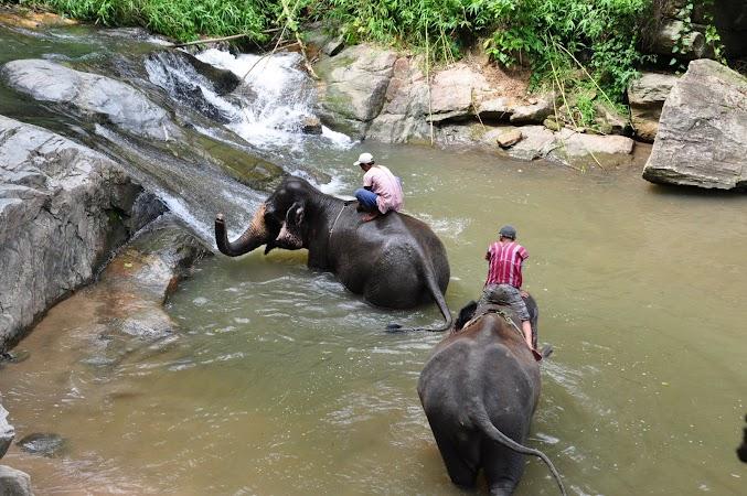 Imagini Thailanda: elefanti jucandu-se in rau, Patara, Thailanda