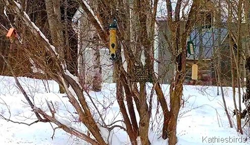 1a. Bird feeders in snow 2-18-14