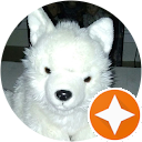 Image Google de petshop etoile stella