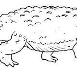 crocodilo.jpg