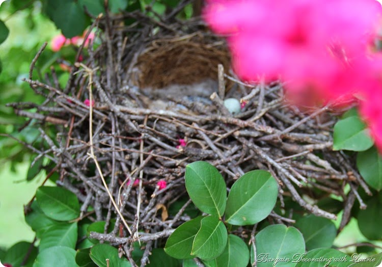 Mocking Bird Nest