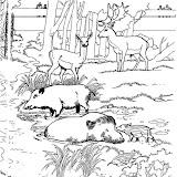 animaatjes-dierentuin-03630.jpg