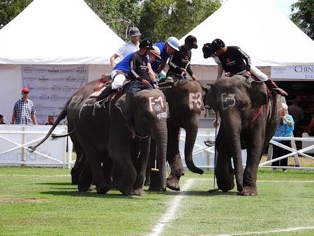 33. Finala Cupa Regelui la polo pe elefanti.JPG