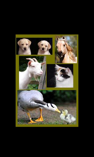 兒童動物園,動物的聲音和照片