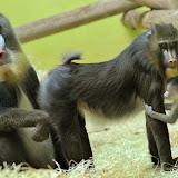 imagenes-de-animales-salvajes-foto-31.jpg