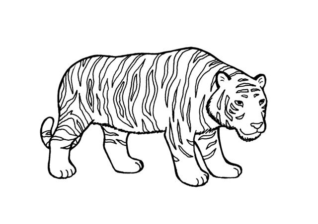 Dibujos De Caras De Tigres Para Colorear: DIBUJOS DE TIGRES PARA COLOREAR