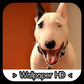 Bull Terrier Wallpapers