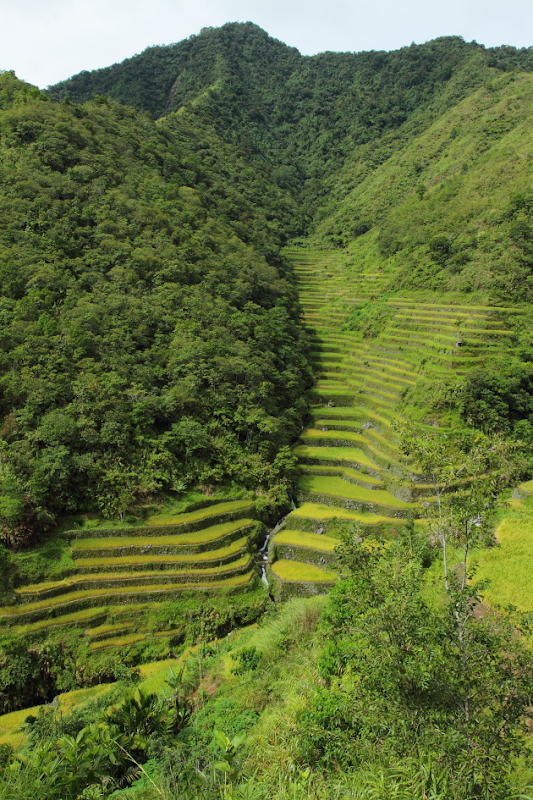 Rice terraces enroute to Batad from the Batad Saddle, Philippines