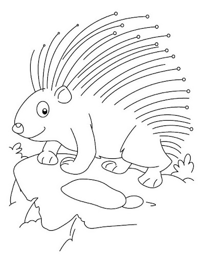 Porcupine printable coloring pages for Porcupine coloring page
