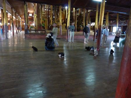 Obiective turistice Myanmar: pisici nesaritoare