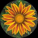 Image Google de michele SURAIN