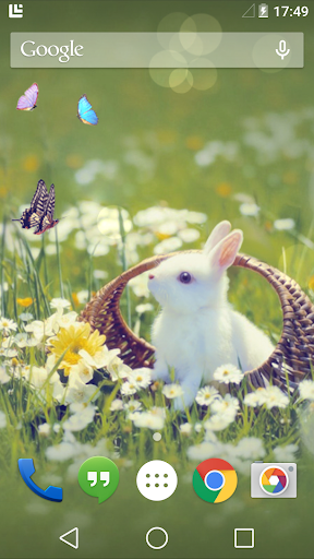 Little Bunny Live Wallpaper