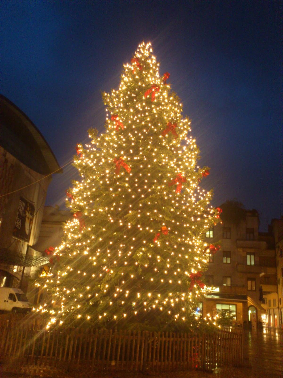 Albero Di Natale Grande.Albero Di Natale Vero O In Plastica