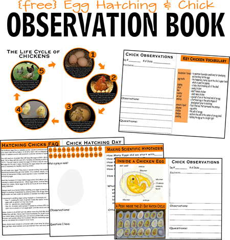 FREE Hatching Baby Chickens - lots of free printable worksheets, chick life cycle, egg hatching vocabulary, observation pages, and more perfect for Preschool, Prek, Kindergarten, first grade, 2nd grade, and 3rd grade kids. This is an awesome science project or science experiment for kids!