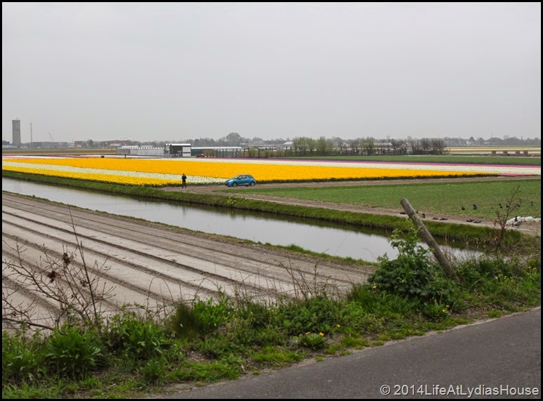 Holland Flower Fields 11