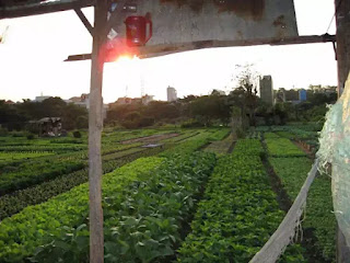 Vườn rau Lộc Hưng — cả một trời kỷ niệm tuổi thơ của tôi.