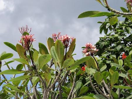 02. Flori tropicale.JPG