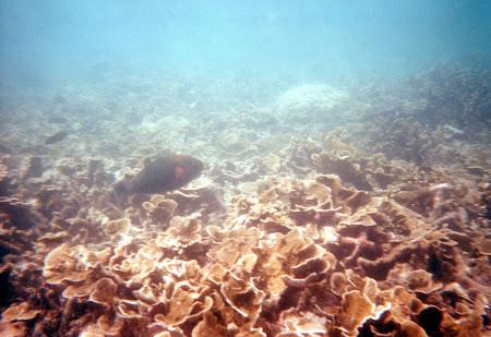 185. corali thailanda.jpg