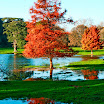Autumn in Lismore-Alice Daly.jpg