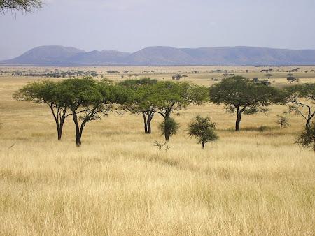 Imagini safari in Kenya