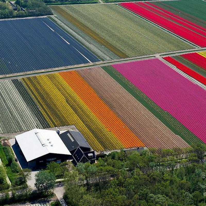 Aerial Photos of Tulip Fields in the Netherlands, by Normann Szkop