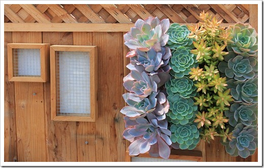120928_SucculentGardens_frames-for-cuttings