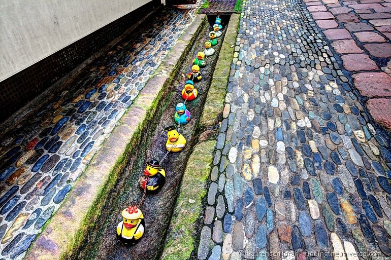 Ducks of Freiburg