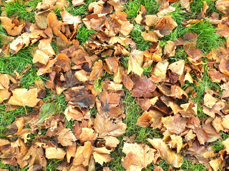carpet of auntumnal leaves