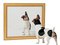 Anjing Kecil dan 1000  Cermin