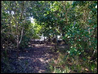 04g - Bay Shore Loop Trail - heading into the Mangroves