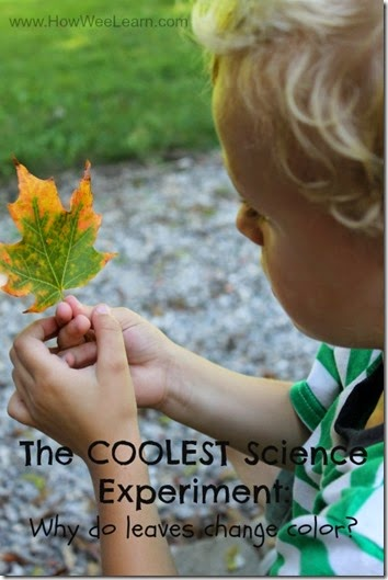 Science Experiment: Why do Leaves Change Colors #preschool #homeschool #scienceisfun #fall #education