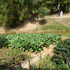 Hector Luis Prieto Diaz Farm