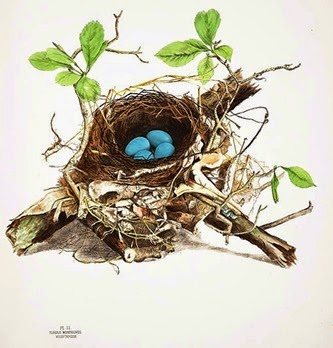 Bird nest watercolors