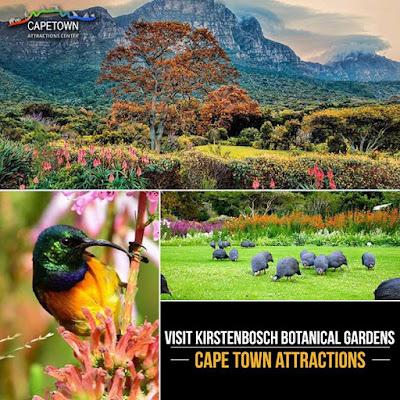 Enjoy a stroll through the most beautiful garden in Africathe Kirstenbosch National