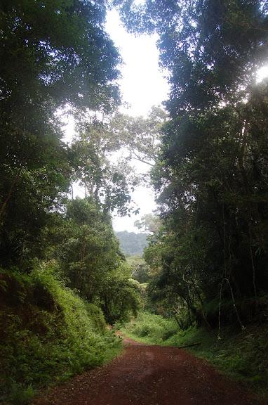 Piste dans le Parc national de la Montagne d'Ambre (500 m), au sud d'Antsiranana, 30 janvier 2011. Photo : T. Laugier