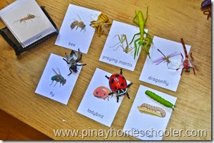 Insect Nomenclature Cards