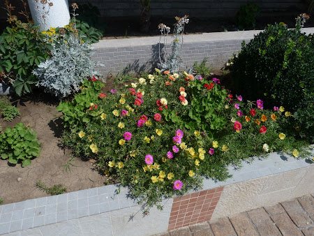 Cazare Costinesti: flori hotel Vox Maris Costinesti