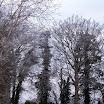 Cold_Trees.jpg