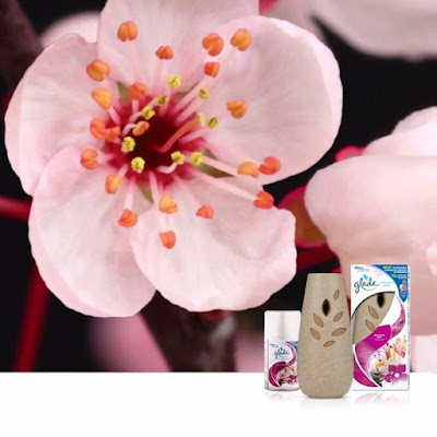 Open up to tranquility with our Relaxing Zen scent Feel peaceful FeelGlade