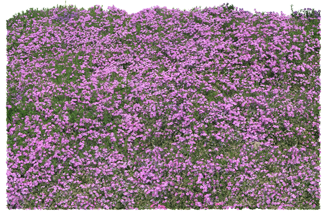 flower trees psd photoshop file