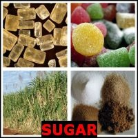 SUGAR- Whats The Word Answers