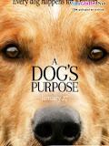 Mục Đích Sống Của Một Chú Chó