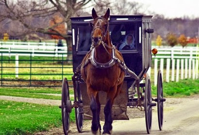 amish-buggy-500x339