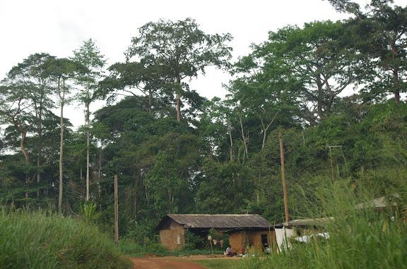 Ebogo (Cameroun), 9 avril 2012. Photo : J.-M. Gayman