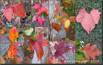 onley fall collage1